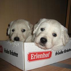TG-Hunde-Karton